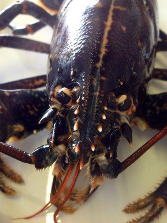 Au Dauphin: Homard frais sur commande
