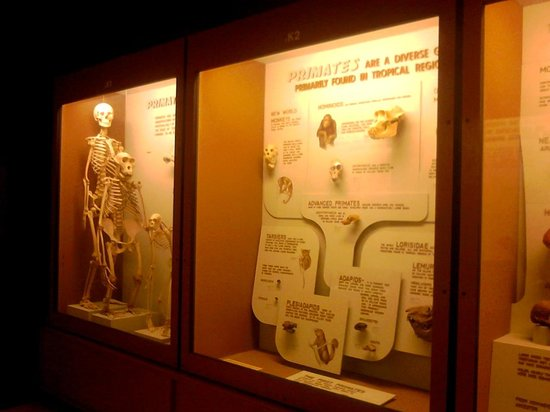 Kelsey Museum of Archaeology: 自然史博物館