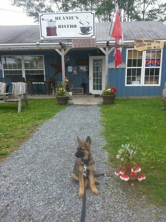 Beanie's Bistro: This is our friend Felix. Beanie's has a dog station of water & treats.
