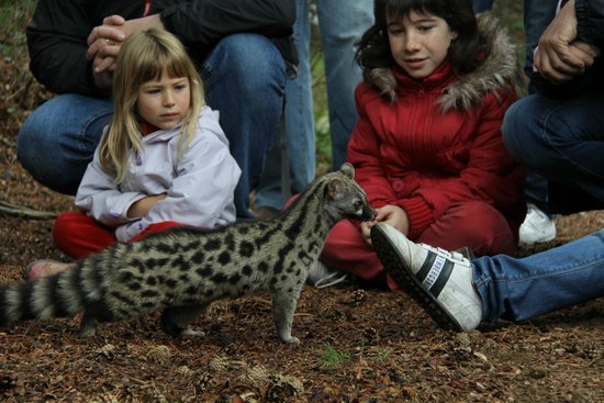 MonNatura Pirineus: Centro de fauna