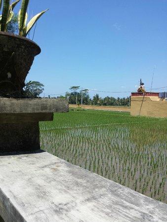 Villa Puri Darma Agung: View from the Villa