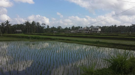 فيلا بوري دارما أجونج: View from the Villa