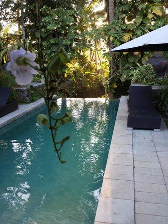 فيلا بوري دارما أجونج: Pool