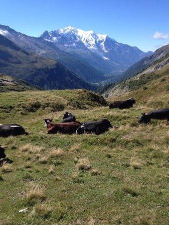 L'Alpage de Balme: les alpages