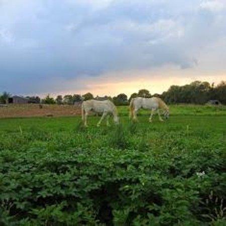 Rigney's Farmhouse Bed & Breakfast : Farm Horses