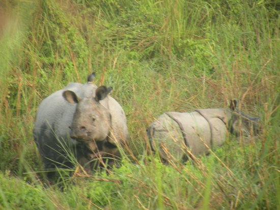 Birina Eco Camp: Rhinos