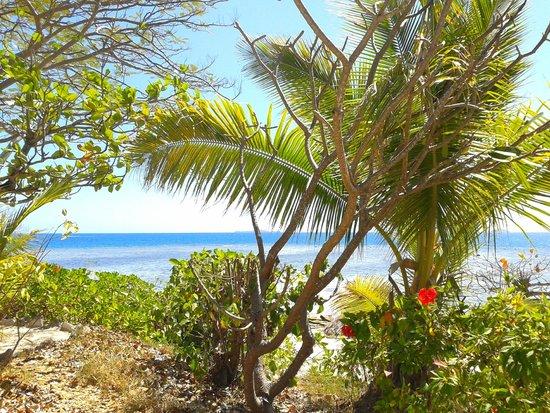 Navini Island Resort: spiaggia