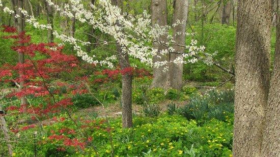 Meadowlark Botanical Garden: Woodland walk - 4-2014
