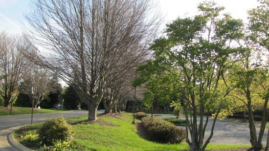 Meadowlark Botanical Garden: Meadowlark Botanical Gardens - entry drive, beech trees 4-2014