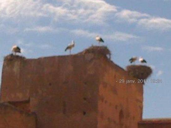 Riad Charme d'Orient: cygognes de la place des ferblantiers