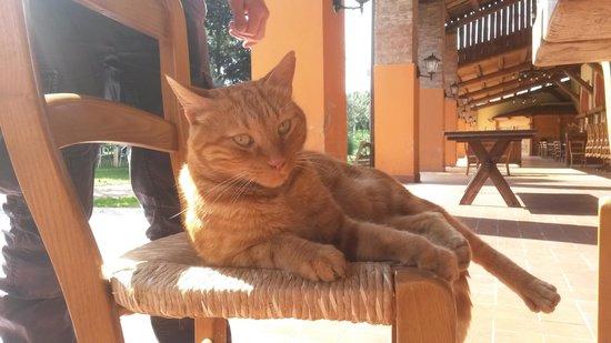 Agriturismo Calcatonega: il dolcissimo micio Rossano, capace di farsi amare anche da chi, come me, non ama i gatti :-)