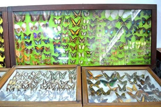 ‪‪Butterfly Museum‬: Butterfly collections‬