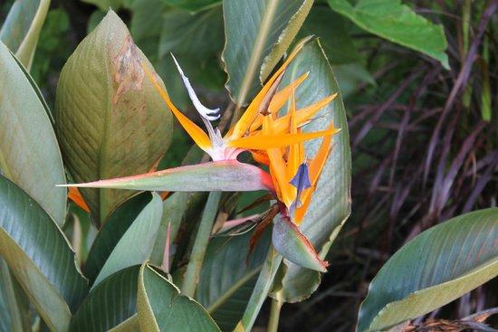 Meadowlark Botanical Garden: Bird of Paradise 8-2014