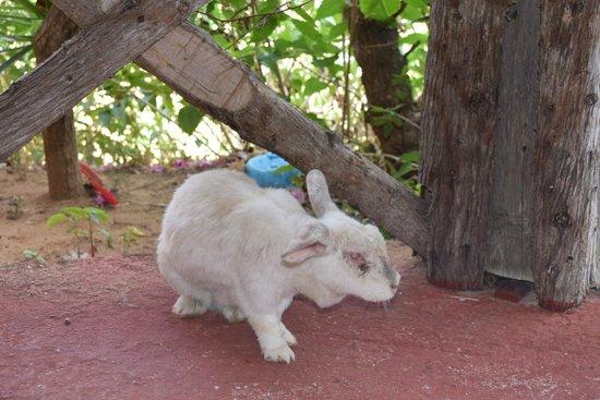 Taverna Galini: Кролик