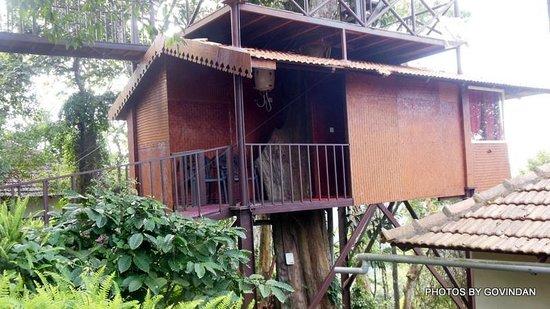 Porcupine Castle Resort: Tree House