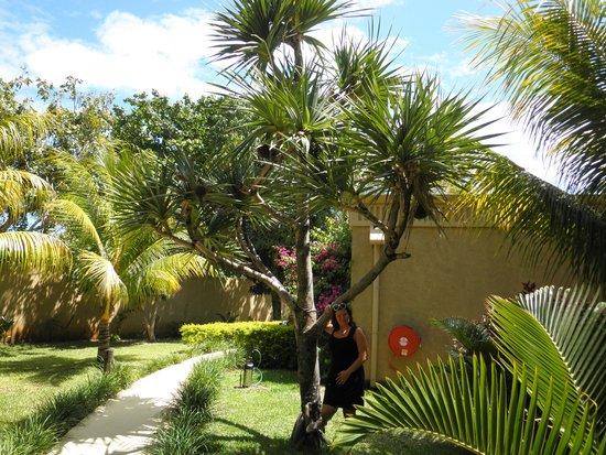 Mauricia Beachcomber Resort & Spa: our garden villa