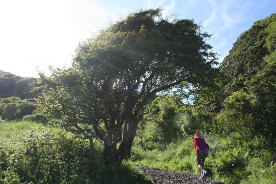 The Gobbins: The faerie tree.