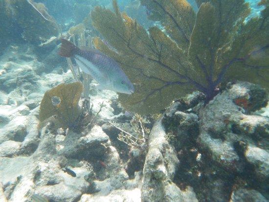 Grecian Rocks: Pentax underwater camera