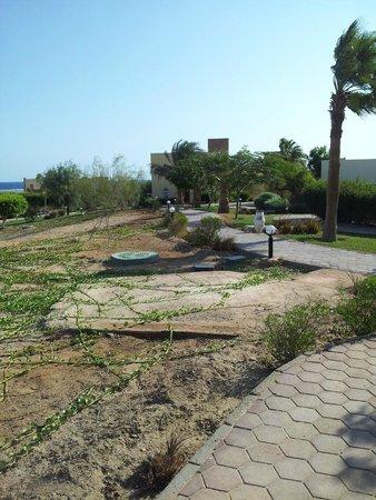Solitaire Resort Marsa Alam: desolazione e il poco verde