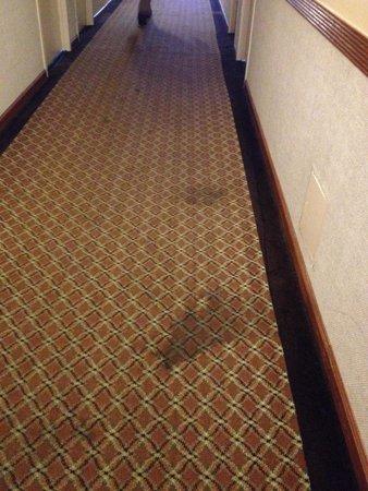 إديسون هوتل آند كونفرانس سنتر: More stained carpets