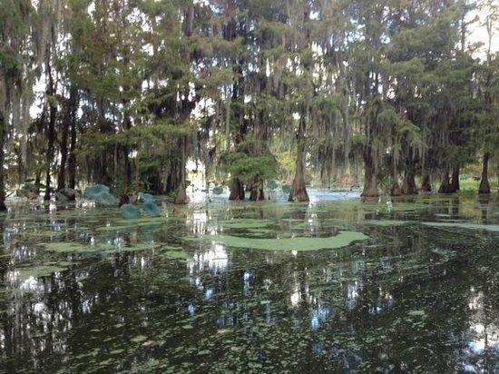 Cajun Country Swamp Tours : swamp
