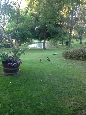 La Libertie: View from the rooms and the ducks that live there!