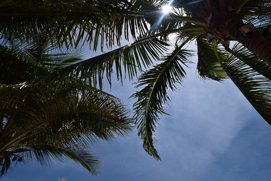 Secrets Capri Riviera Cancun: having lunch was amazing