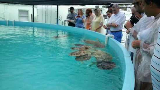 The Turtle Hospital: Feeding the Turtles green peppers