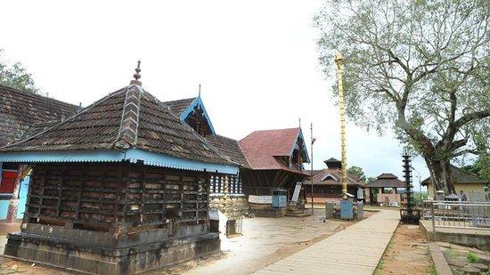 Thirumandhamkunnu Bhagavathy Temple: Kodi maram