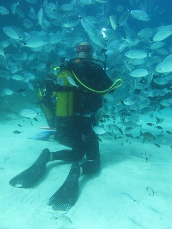 Paradise Diving Malta: Os peixes apareceram