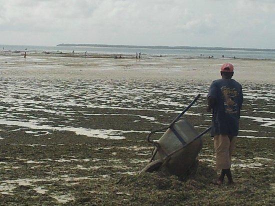 بالومبو ريف ريزورت: staff rimuove alghe