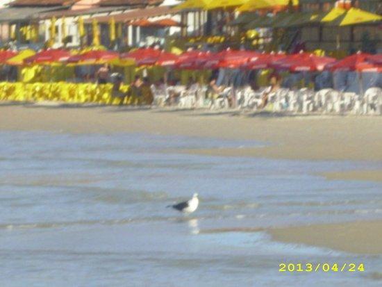 Praia das Conchas: Área dos quiosques