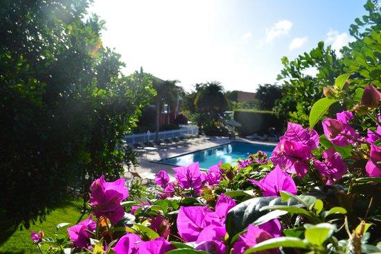 Ramada by Wyndham Naples: Winter Morning Pool