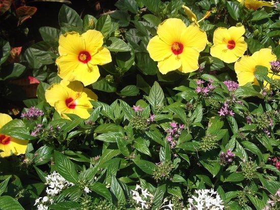 Ramada by Wyndham Naples: Smiling Hibiscus