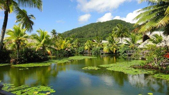 """مايتاي لابيتا فيلاج هاوهين: Le lac du """"village"""""""
