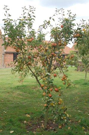 Strenneth: Autumn Apples