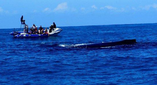Tofo Scuba: Ocean safari