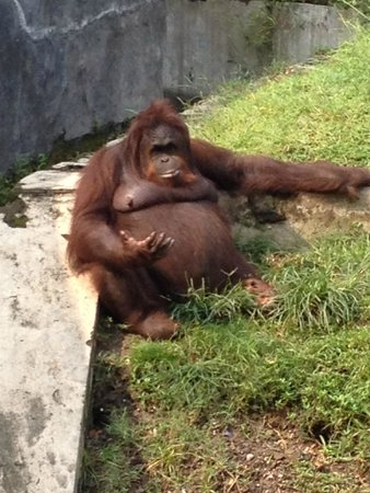 Surabaya's Zoo: Please do not feed the animals!! No matter what they say...