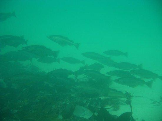 Dive Newquay : Under water scenes