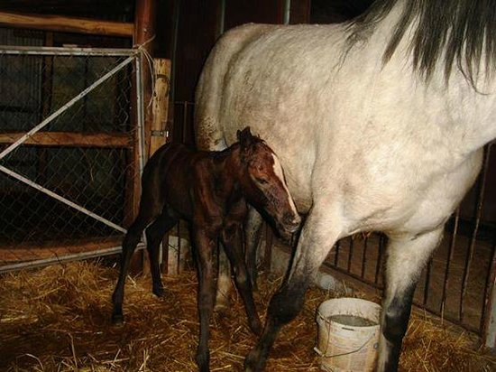 Azienda Agrituristica Masseria Montenero: i cavalli, gioia e passione di Fabio il giovane fattore dell'azienda