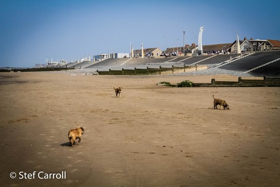 Cleveleys Front: Looking up at the Promenade from a lovely clean dog friendly beach.