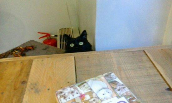 MiaGola Caffe: Quando si mangia???
