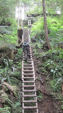 West Coast Trail: Ladders along the WCT. Not as hard as they look!