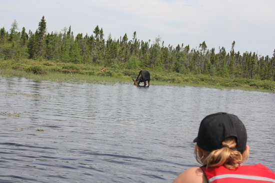 Twin Maple Outdoors: Moose