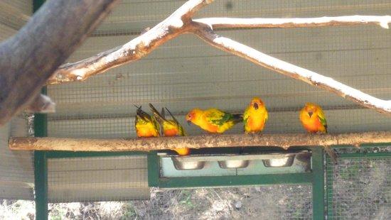 Le Jardin Aux Oiseaux : copins