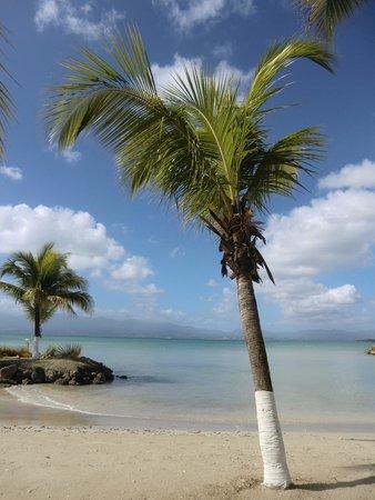 Hotel-Residence Canella Beach: Plage