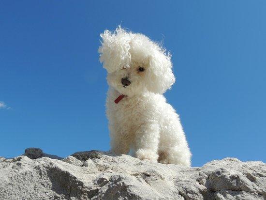 بي آند بي ماريبوسا: The DOG