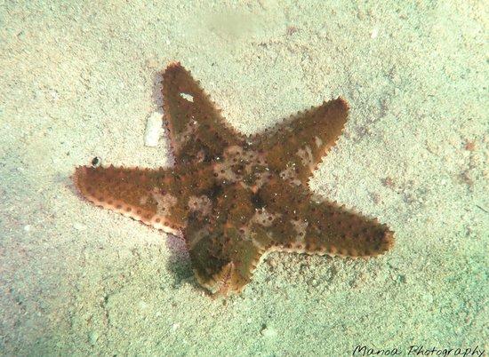Roatan Boat Adventures: Starfish at Sam's snorkeling spot