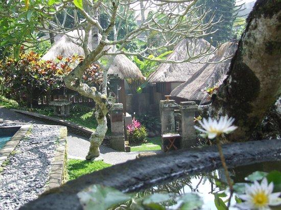 Pertiwi Resort & Spa: exemple de vue depuis une chambre