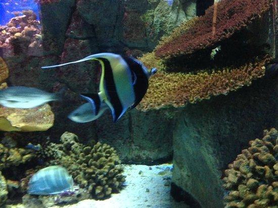 Much Fish Picture Of Birch Aquarium At Scripps La Jolla Tripadvisor
